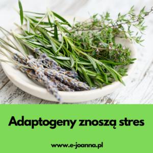 Adaptogeny – zioła podnoszące energię